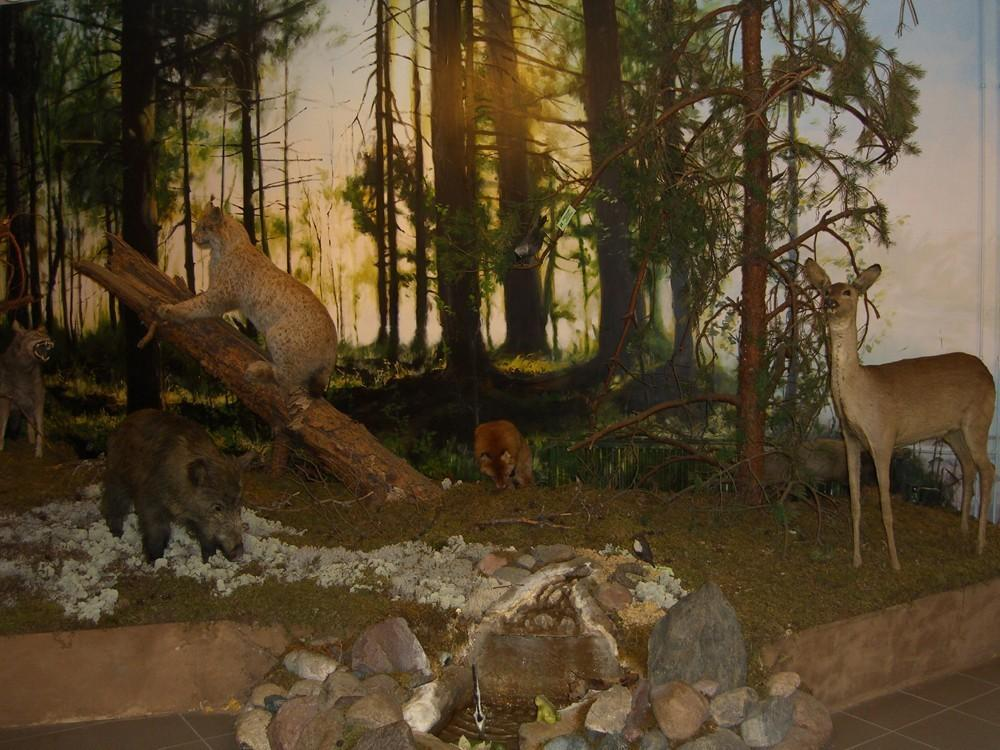Valga Museum – Nature Exhibition