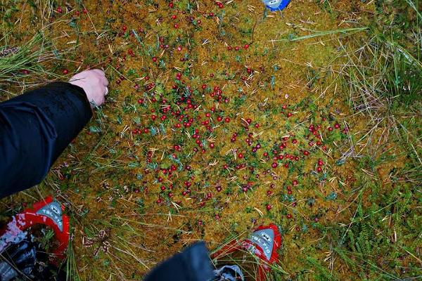 Cranberries. As simply as that...!!