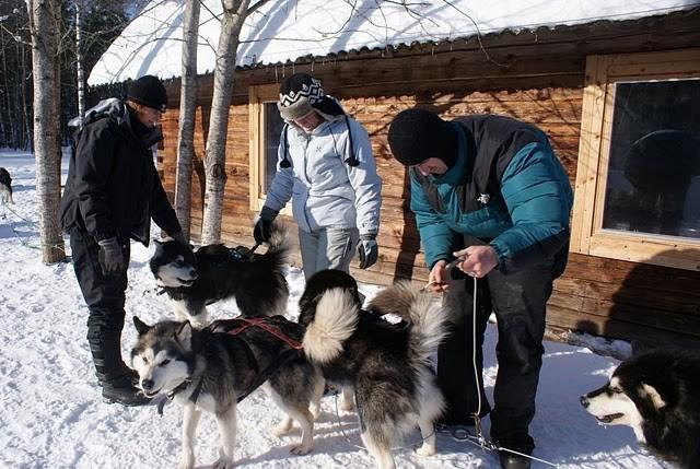 handling the dogs and explanation about how to drive the sled