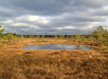 Bogs and mires