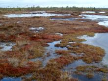 Bogs and mires represent the primeval beauty of Estonian nature