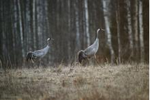 Estonia is ideal for bird-watching