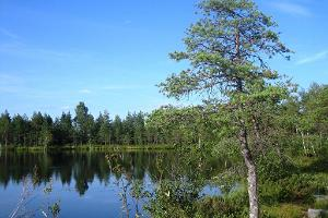 Jalase nature trail in the Rapla County