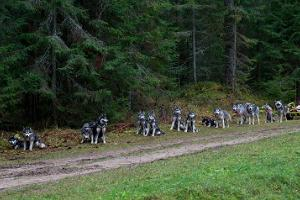 Sled dog hikes in the forests and swamps of East Estonia