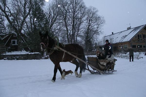 A sleigh ride at Mokko