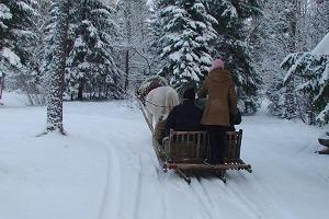 Sleigh ride with Estonian horses from Voore Tallid stables in the Varbola stronghold