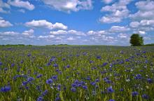 The `Cornflower' – rural accommodation quality assurance