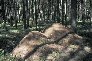 Wood ant mounds