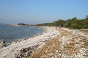 Sea shore covered with scree