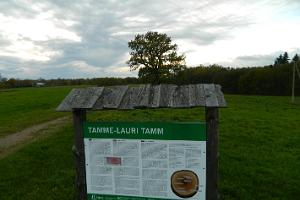 Tamme-Lauri ozols