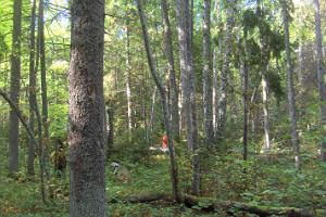 Broad-leaved forest in Virussaare