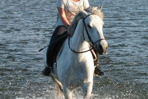 Ratsukievari horseback riding hikes
