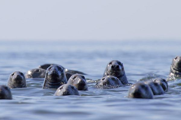 Regular seal-watching trips to islands in Kolga Bay in the summer of 2017!