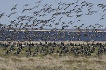 Migratory bird routes: Estonia, a bird-watchers paradise