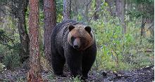 Brown Bear Photography hide rent