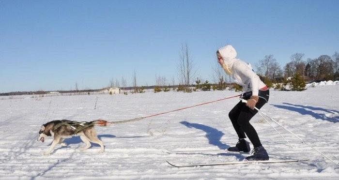 "International sleddog race ""Jälg 2013"""