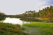 Nature trail of the Meenikunno bog