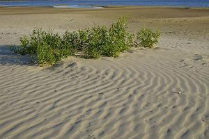 Lake Peipus – sandy beach and the so-called singing sands