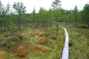 Seljamäe study hiking trail