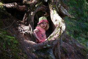 The roots of a very old tree penetrating the sandstone are irresistible to children