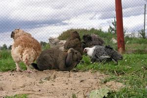 Ohter animals and a rabbit from the  ostrich farm of Sassi