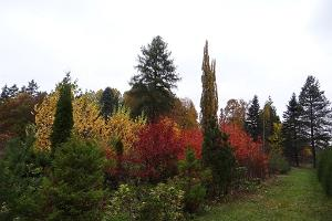 View of the park in autumn