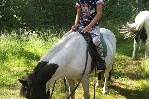 Pony in the summer
