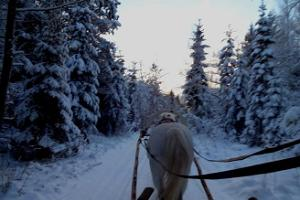 A sleigh ride in the magical forest surrounding Varbola stronghold