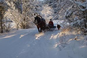 Sleigh ride in snowy Estonia