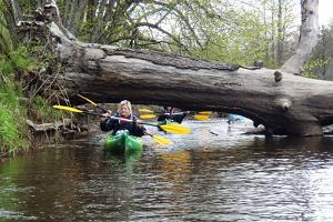 A kayak trip on the rivers of Soomaa National Park