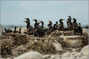 On kayaks, nature can be observed very closely. A colony of cormorants on the islet Linnusitamaa