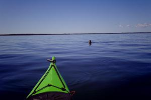 The islet protection area is one of the best places for seeing ringed seals. The seals come to look at the kayaks.