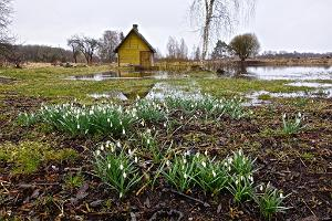 Rebasevälja farm in the spring