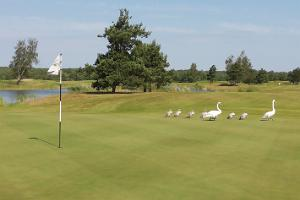 Saaremaa Golf & Country Club