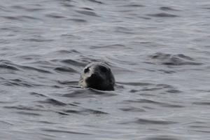 Seal-watching trips to Malusi islands