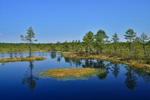 Day trip: Viru bog and an Estonian sauna experience; Viru bog