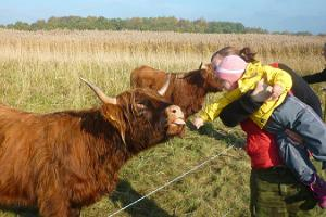 Meet the town cows of Pärnu!
