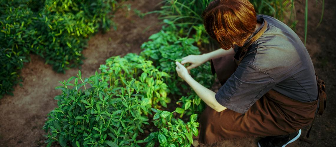 Harvest your own food