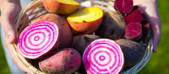 Estonian superfoods - beetroot