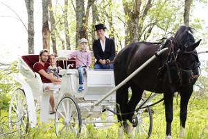 Mounted trips and camps, as well as horseback riding for enthusiasts of all skill levels at Juurimaa Stables