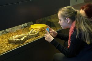 Live animals at the University of Tartu Natural History Museum