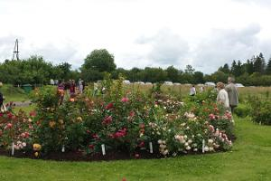 Rose garden at Roosoja Farm