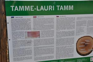 Tamme-Lauri oak - Estonia