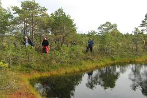Bog-shoeing in northern Kõrvemaa
