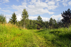 Kekkonen hiking track