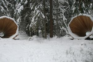 Forest megaphones in Võru County