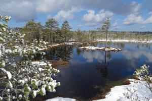 Hochmoor im Winter