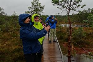 Walk on a boardwalk in Viru bog