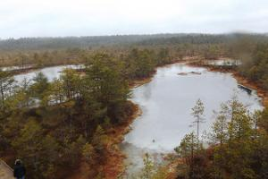 Guided hike in Viru bog