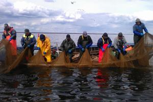 Baltic herring expedition in Kihnu